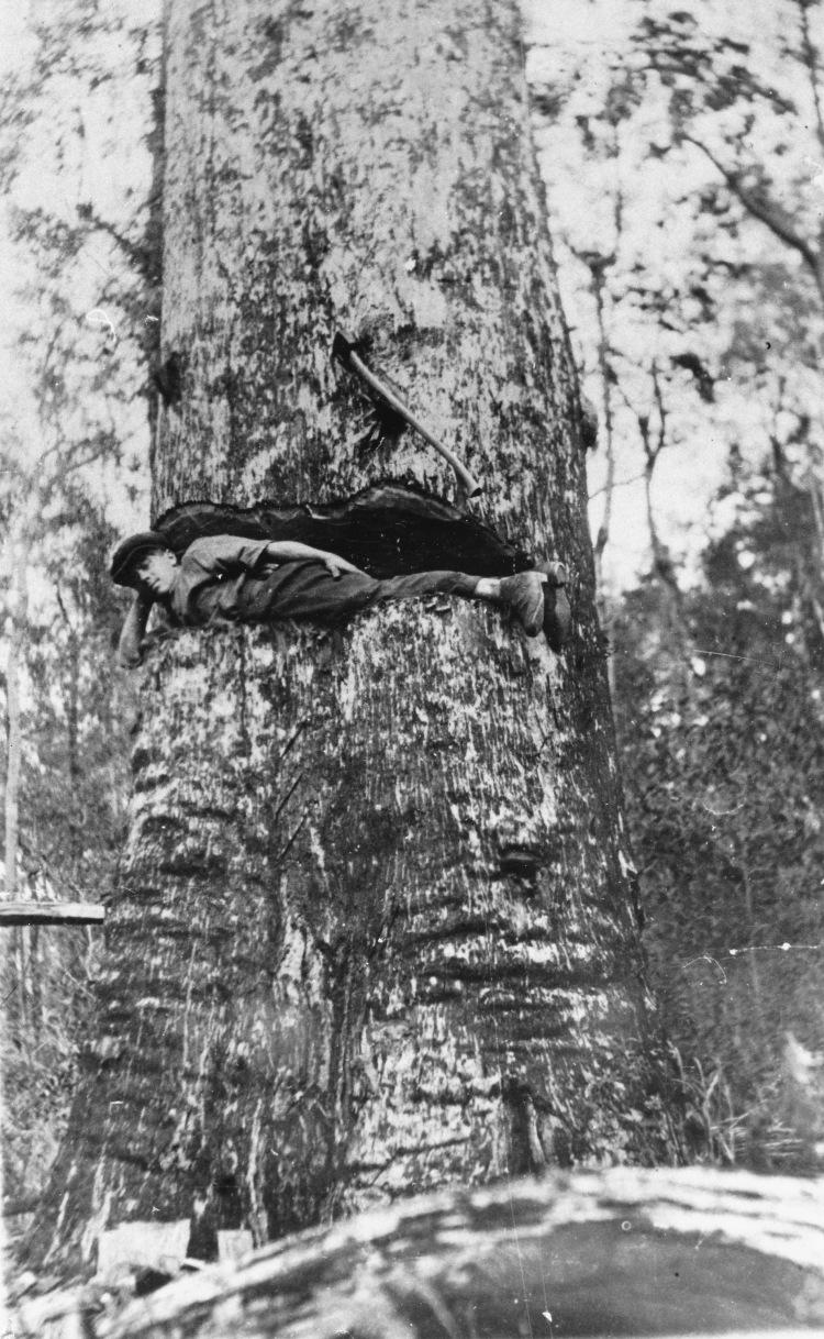 albert nugget brooker red stringy bark resting