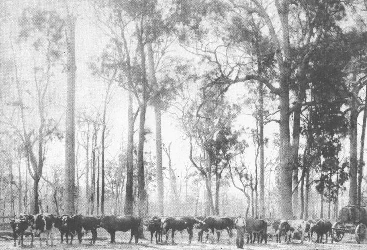 henry fogg's team early 1900's